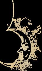 NIVEL II – CURSO DE TAROT ARCANUM DIVINATIO